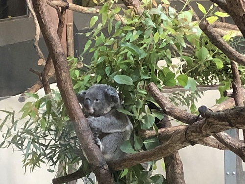 多摩動物園12.jpg