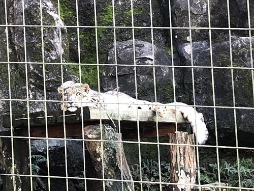 多摩動物園14.jpg