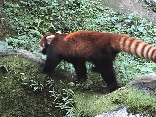 多摩動物園16.jpg