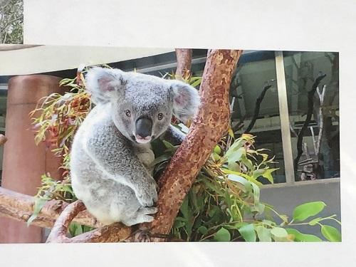 多摩動物園写真13.jpg