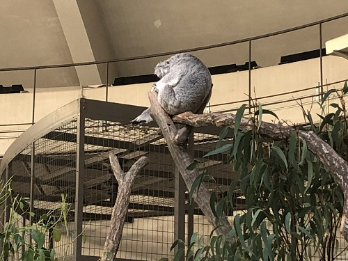 多摩動物園9.jpg