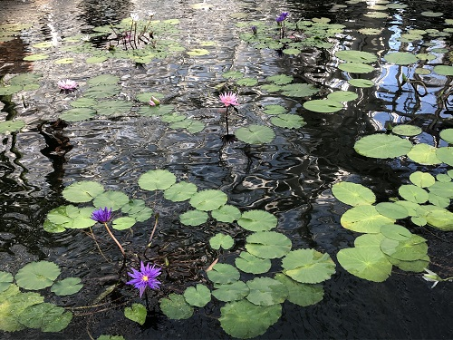 IMG_2143[1]神代植物園7..jpg