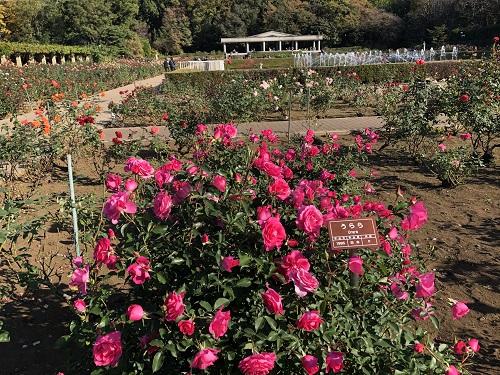 IMG_2153[1]神代植物園10.バラ園.jpg