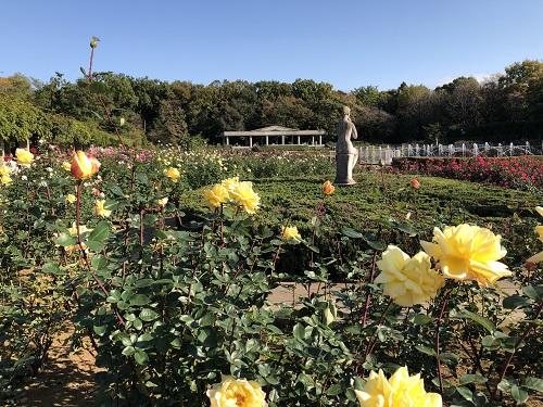 IMG_2155[1]神代植物園11.バラ園.jpg