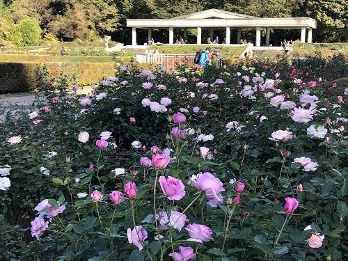 IMG_2159[1]神代植物園12.バラ園.jpg