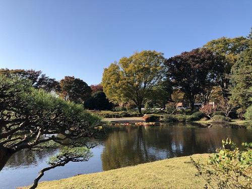 IMG_2175[1]神代植物園18.せせらぎの小路.jpg