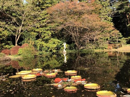 IMG_2184[1]神代植物園21.紅葉.jpg